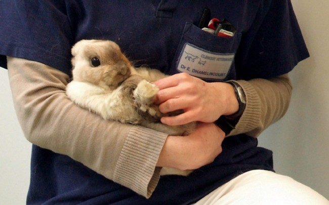 cliniuque veterinaire lapin