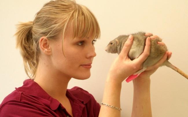 veterinaire nac rat